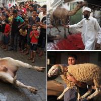 知られざる真実!牛肉輸出大国インド。