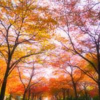 晩秋を歩く