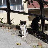 猫の細道(3)