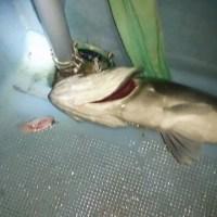 Sea BASSもまずまず 春告魚は80匹ほど