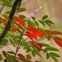 小さい森の小さい秋。