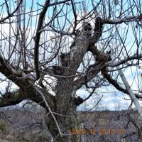 散策コースの風景写真12月25日