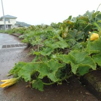 雨が降ります、三浦半島