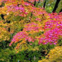 深秋の日本庭園見納め