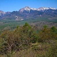 サクラソウの咲く山