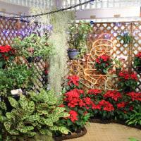 【京都府立植物園】第25回ポインセチア展開催のお知らせ(2016年12月2日~25日)