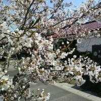 「昭和の日」は気持ちの良い朝を迎えました(#^.^#)
