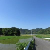 5月26日の散歩 暑く成りました。