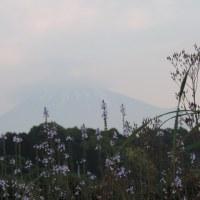 今朝の富士と景色