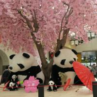 上野駅のパンダの飾り