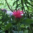 モルダナの花