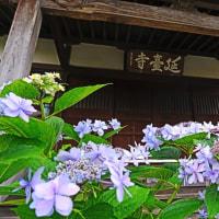 『寺社の紫陽花』 延台寺