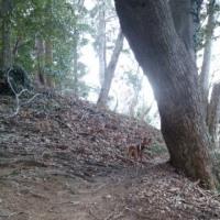 公園巡りとプチプチ登山