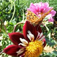 ある花壇での写趣