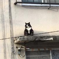 こやつは・・・猫である。