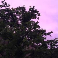 ピンク色の夕焼けは