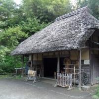 舞岡公園~谷戸の田んぼ風景