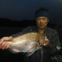 土、日曜日夜釣り釣果写真
