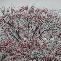 11月に初雪