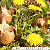 行きます福島市!5月20日21日「ふくしま手づくりマルシェ」♪