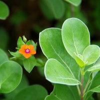 小笠原の植物・動物いろいろ