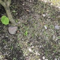 「まゆみ」の木にも花。