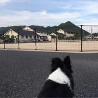 夕方散歩〜♪