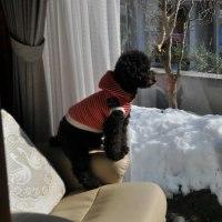 また雪・・・暴風雪波浪警報・・・・雪は少ないらしい・・・
