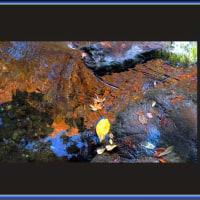 流れに映る秋模様
