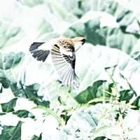 今日の鳥見
