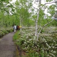 ピークですよ~! Tsutsujigahara nature trail