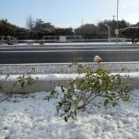 広島県福山市中心部の積雪(2017.1.15)
