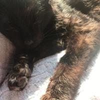 老猫の介護