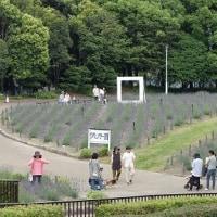 ラベンダーフェア(荒子川公園)
