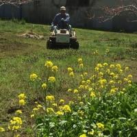 草刈り日和