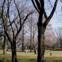 大場城址公園