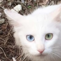 我が家の白猫プロジェクト。始動の巻