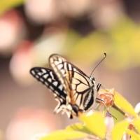 ブルーベリーと虫たち