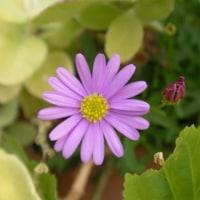 2007-10-23花の美術館02