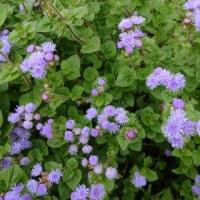 能古島の花々