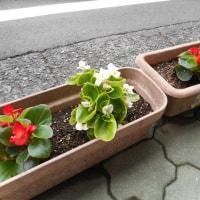 白子商店街アーケードお花植え替えました!