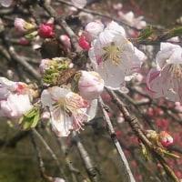 春爛漫の信州