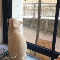 クォン・サンウ  サインバネルにじゃれてるムカンくん~😸