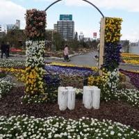 梅田・グランフロント庭園~春景色 続き《完》