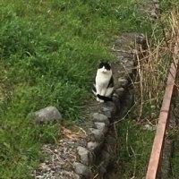 【多肉生活】月兎耳&キタキツネ、来襲!