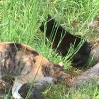 久しぶりの公園で猫に怒られる