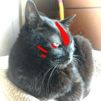 ラクガキ妹猫