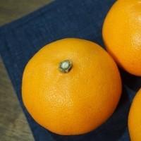 柑橘の「せとか」・・・美味しい!!