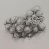 葡萄のデッサン