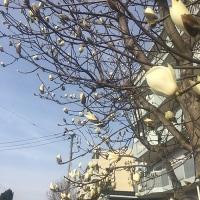 3月16日の練習 ~ 桜台センター視聴覚室